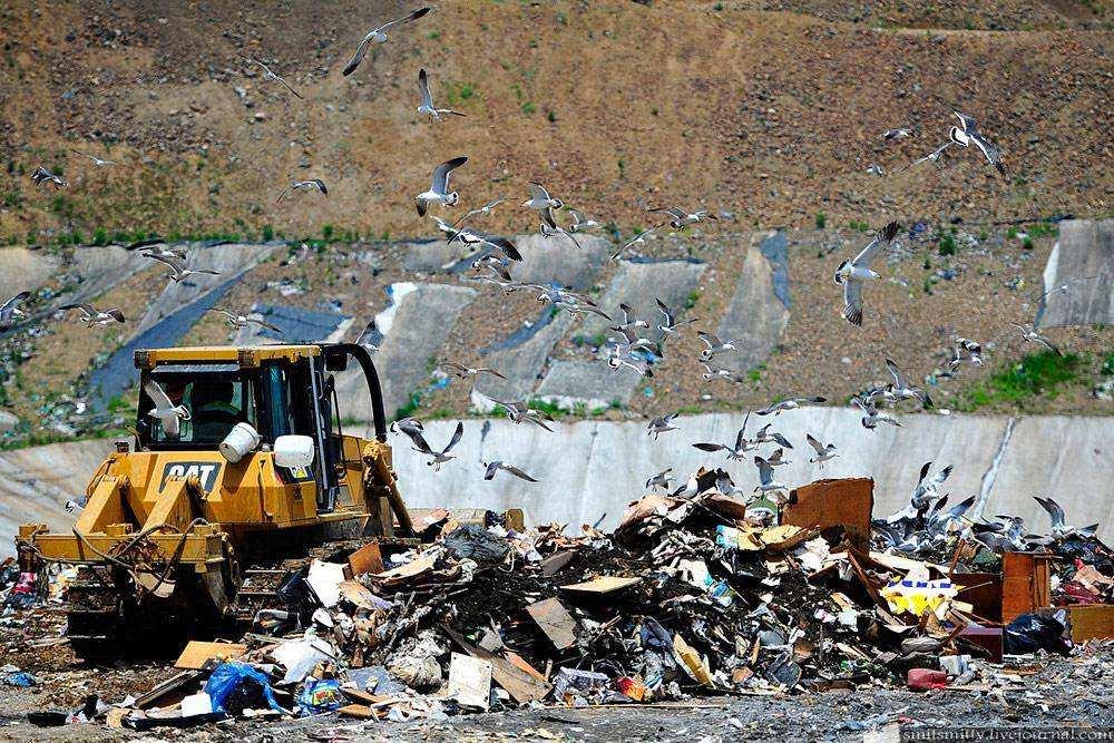 Неприглядная сторона Владивостока: как и где утилизируется городской мусор