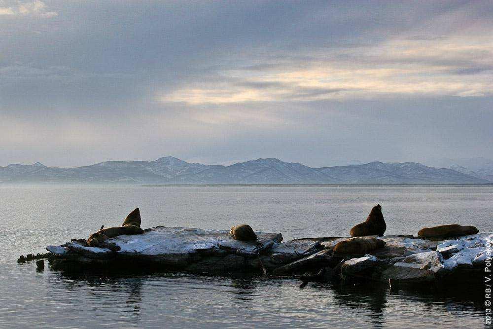 Каникулы на Камчатке