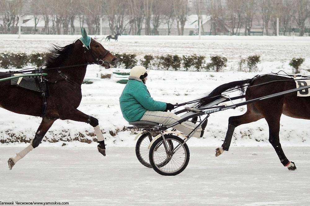 Cезон испытаний лошадей рысистых пород