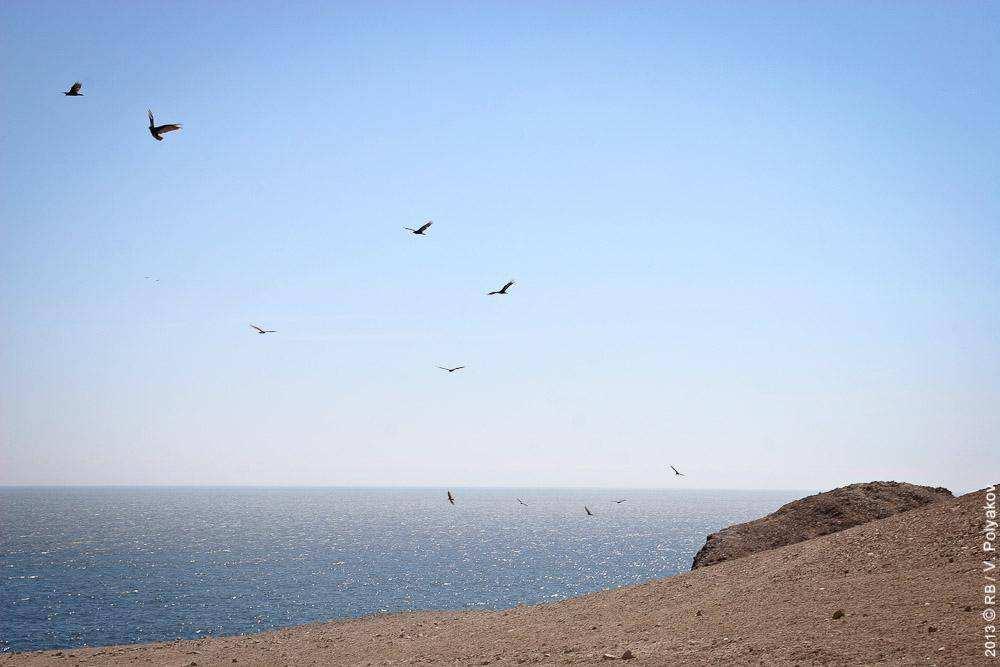 Перу. Пустыня Наска. Мыс Сан-Фернандо