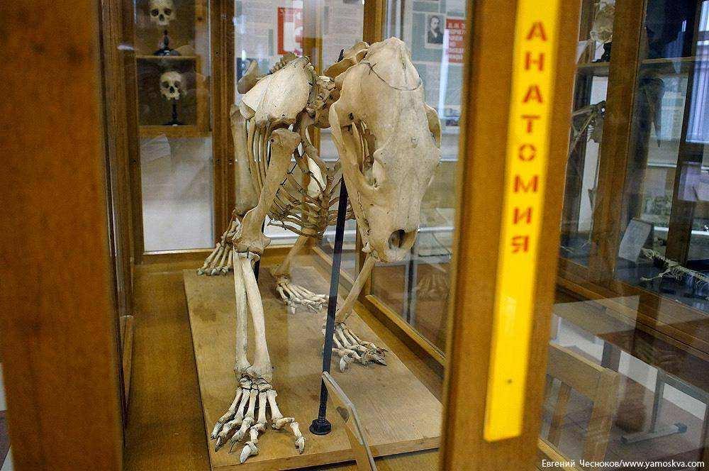 Без анатомии не может быть медицинской науки