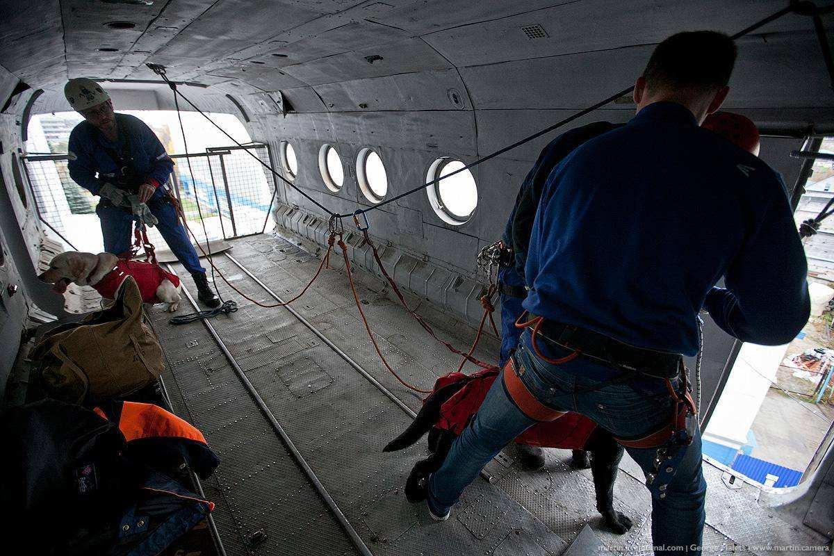 Как собак сбрасывают из вертолета