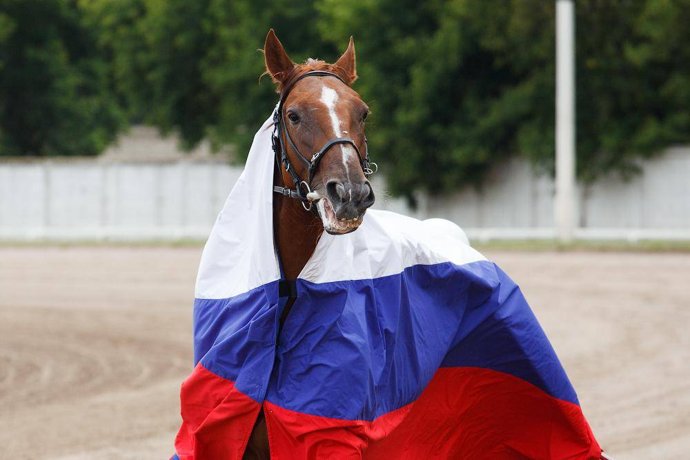 На Московском ипподроме разыграли Большой Всероссийский приз