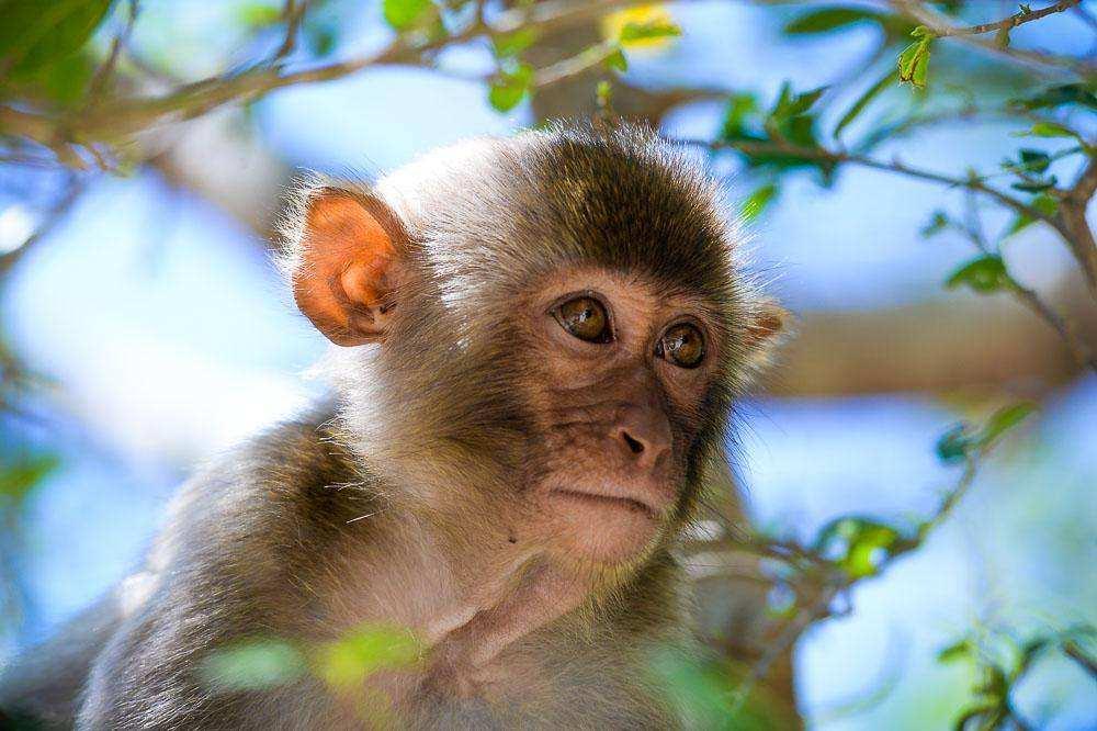 закрывайте красивые обезьянки фото обгон назначат