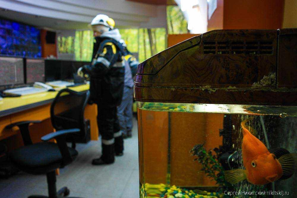 Как делают российское моторное масло