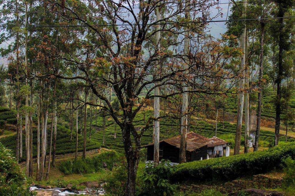 Сокровища Шри-Ланки