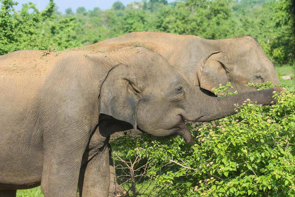 Удавалаве: дом слонов и павлинов