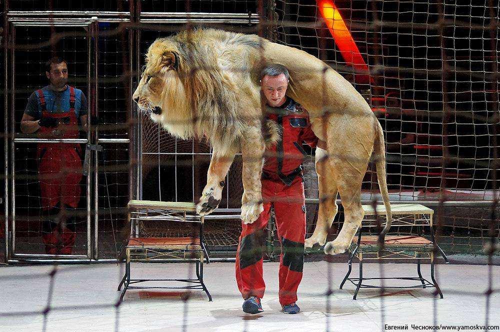 Новая цирковая программа «Посланник»