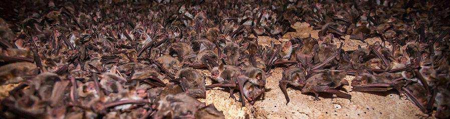Оргия летучих мышей