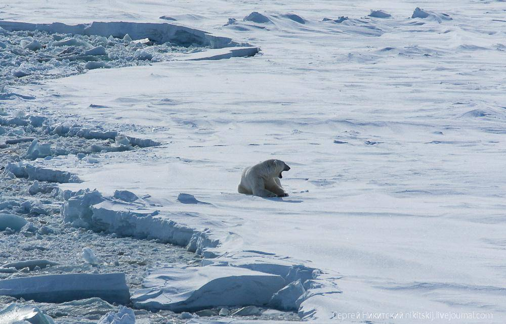 Животный мир Арктики