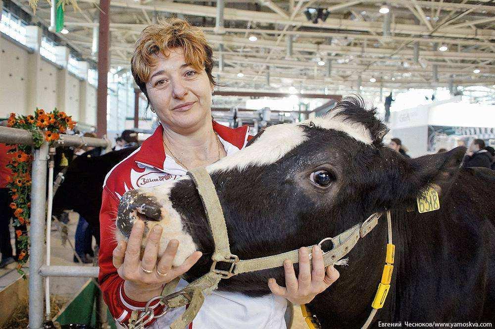 Коровы на ВДНХ