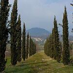 Виноградник Ca 'Botta