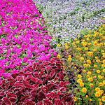 Фестиваль цветов на Красной площади