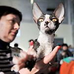 Выставка кошен на ВВЦ