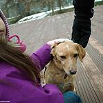 Бездомные животные из приюта «Эко-Бирюлево»