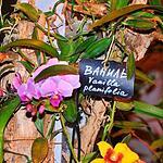 Экспозиция орхидей в Ботаническом саду МГУ
