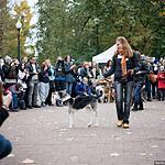 Выставка собак из приютов