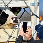 Коровы прилетели во Владивосток