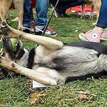 Выставка бездомных собак и кошек - Надо брать!
