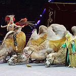 Всемирный фестиваль циркового искусства ИДОЛ-2014