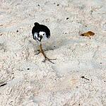 Мальдивская Республика, остров Бьяду