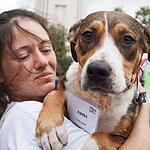 Выставка бездомных животных - Надо Брать! Летом!
