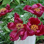 В Аптекарском огороде расцвели цветы и девушки