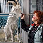 Дрессированные козы Ирины Левицкой