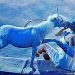 Американские миниатюрные лошади Яны Шаниковой