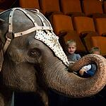 В Астрахани проходит Карнавал слонов