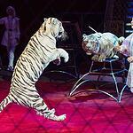 В Цирке Никулина начался «Карнавал»