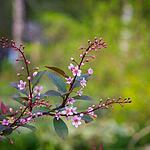 Весна в «Аптекарском»