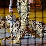 «Цирк Дарьи Костюк»
