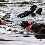 Водоплавающие собаки не дадут утонуть на московских пляжах
